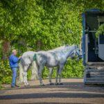 paardentrailer kopen
